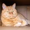 Gingivita la pisici: Simptome si Tratament